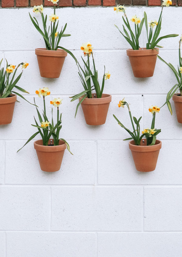 5 Simple Ways to  Refresh Your Home for Spring