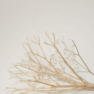 dried plant branch on white table