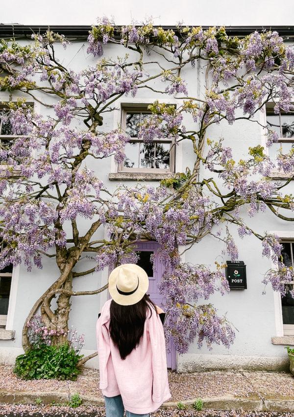 A Dreamy Wisteria-Clad House in Ireland